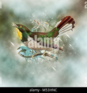 Digitally enhanced image yellow-throated cuckoo (Chrysococcyx flavigularis). A species of cuckoo in the Cuculidae - Stock Photo