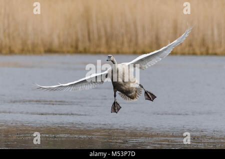 western palearctic - Stock Photo