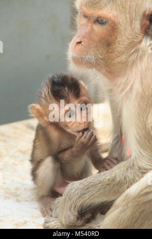 Mother monkey and baby monkey sitting on the ground - Stock Photo