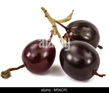 Currant black berries isolated on white background - Stock Photo