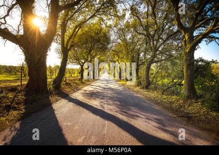 olgherese road, autumn or fall, tree straight at sunrise. Castagneto Carducci Bolgheri Maremma, Tuscany, Italy Europe. - Stock Photo