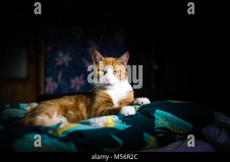 A portrait of a cat lying on the bed - Stock Photo