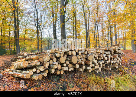 Pile of tree trunks in fall forest - Stock Photo