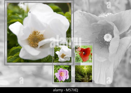 white red and purple flowers composition - Stock Photo