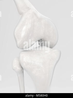 Knee without modern knee prosthesis - 3D Rendering - Stock Photo