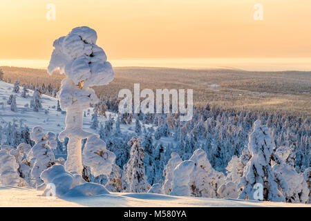 Snowy trees in Finnish Lapland - Stock Photo