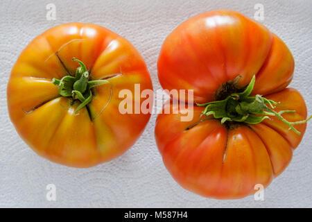 Florida, FL, South, Miami Beach, SoBe, home grown garden tomatoes, tomatoes, heirloom, turning red, ripe, harvested, symmetrical, asymmetrical, wrinkl Stock Photo