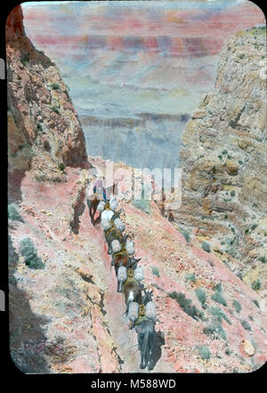 Grand Canyon Historic Kaibab Trail Mule Riders. PACK TRAIN ON SOUTH KAIBAB TRAIL CHIMNEY APRIL 1935 DODGE ON LABEL. - Stock Photo