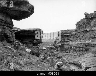 grca  Topocoba Canyon Toadstools . TOPOCOBA CANYON AND UNUSUAL ROCK FORMATION.  A LOADED PACK MULE AND A MAN ON - Stock Photo