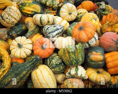Pumpkins on a pumpkin farm. Autumn is here! - Stock Photo