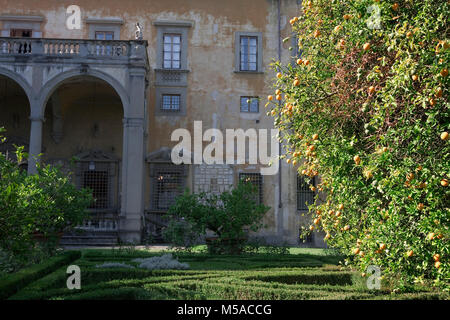 Giardino Corsini al Prato, Florence, Tuscany, Italy: view of the palace across the box hedging with a lemon tree - Stock Photo