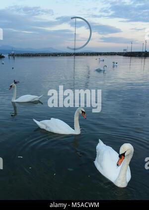 Swans on Geneva Lake in Lausanne, Switzerland - Stock Photo