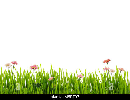 Fresh spring grass and daisies, isolated on white background - Stock Photo