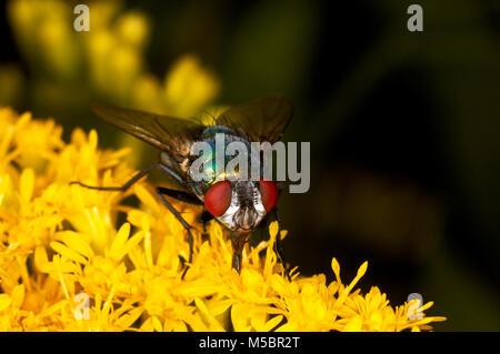 Fliege auf einer Blume - Stock Photo