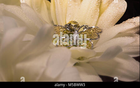 Gold butterfly on white flower - Stock Photo