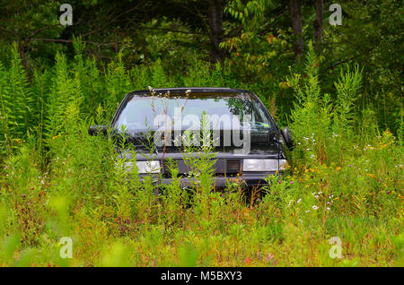 Abandoned black Chevrolet automobile in a field of weeds and wildflowers with copy space. - Stock Photo