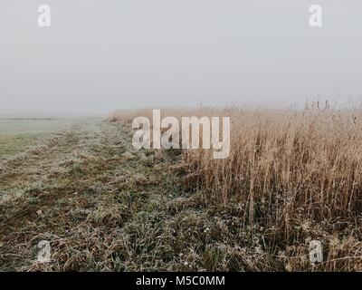 White nothing behind wheat field. Harsh autumn scene with fog. - Stock Photo