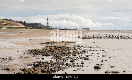 Seagulls feed at the water's edge on Blackpool Beach, with the iconic Blackpool Tower and North Pier in the distance. - Stock Photo