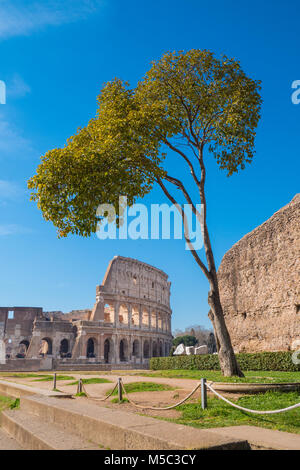Colosseum as seen from the Palatine Hill in Rome, Italy - Stock Photo