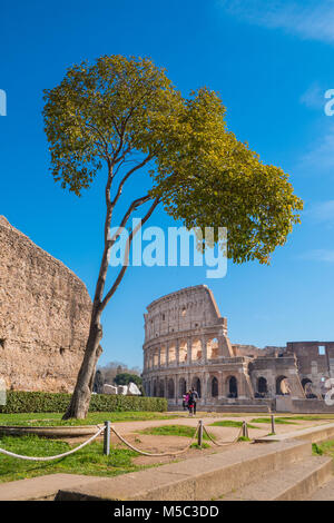 The Roman Colosseum as seen from the Palatine Hill in Rome, Italy - Stock Photo