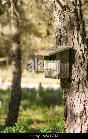 Wooden bird nest box, nestbox, hanging in tree in spring in forest. - Stock Photo