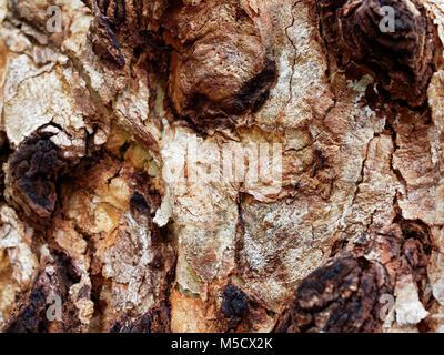 Abstract texture of close up tree bark - Stock Photo