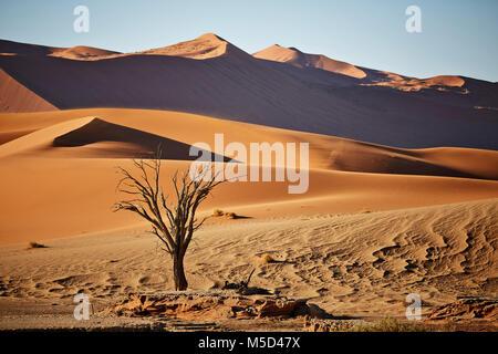 Dead camelthorn tree (Vachellia erioloba) in front of sand dunes, Sossusvlei, Namib Desert, Namib-Naukluft National Park