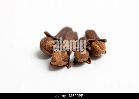 Remedial plant, dryly, plant parts, remedial plants, herb, herbs, tea, tea herbs, carnations, carnation, clove - Stock Photo