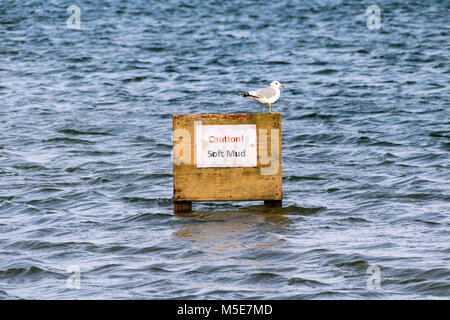 Seagull Perched on a Warning Sign in a Flooded Car Park Behind the Pebble Ridge; Northam, Devon, England - Stock Photo