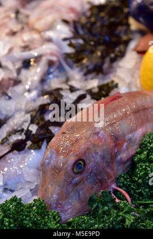 a gurnard or red snapper freshly caught fish on a wet fishmonger stall at borough market in central london. Catching - Stock Photo