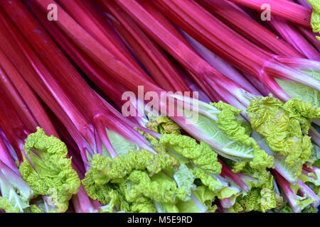 fresh rhubarb on display at a greengrocers fruit and vegetables stall at borough market in central london. Rhubarb - Stock Photo