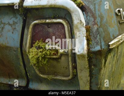 moss and lichen growing on taillight of an old abandoned car sitting in the yard - Stock Photo