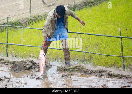 A young boy is returning home after purchasing two fish from the fair (Poradah Mela) for the family. - Stock Photo