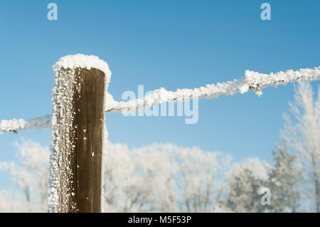 Newell County, Alberta, Canada.  Barbed wire fence and wooden post covered in hoar frost against a background of - Stock Photo