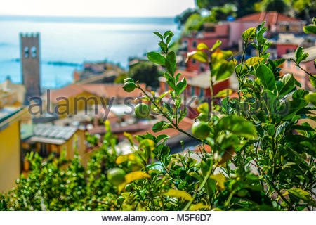 Lemons ripen on a tree in the colorful village of Cinque Terre Italy with the Chiesa di San Giovanni Battista, church - Stock Photo
