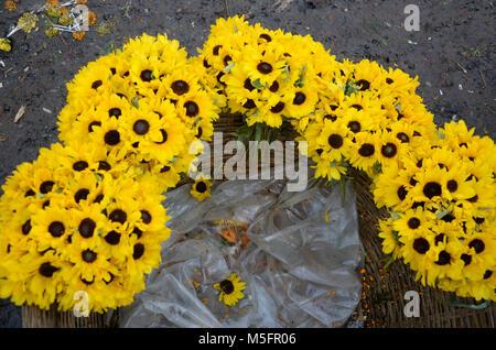 sunflowers in flower market, Kolkata, West Bengal, India, Asia - Stock Photo