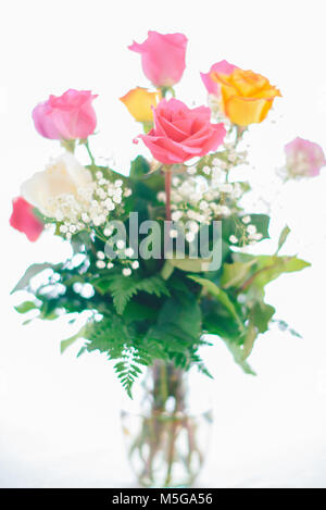 Roses of different colors - Stock Photo