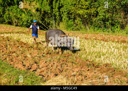 A farmer is ploughing a field with a water buffalo in the hills of the tribal area - Stock Photo