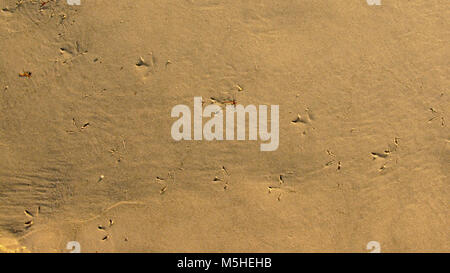 Footprints of a bird in the sand on a beach along the baltic sea - Stock Photo