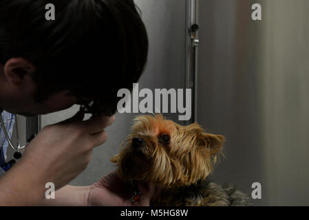 """Dr. Leland Raymond, 20th Medical Group veterinarian, gives """"Stormie"""" her checkup in the vet clinic at Shaw Air Force - Stock Photo"""