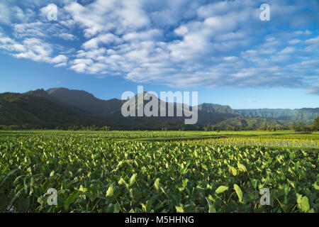 Beautiful morning clouds pass over the flooded taro fields in Hanalei Valley on Hawaii's Island of Kauai. - Stock Photo