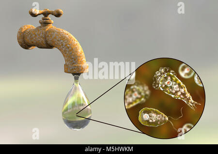 Tap water contaminated with the brain-eating amoeba Naegleria fowleri,computer illustration.This organism is an - Stock Photo