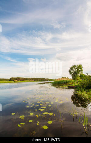 A river rural landscape with water lilies in the water and a tree on a picturesque shore covered with green grass - Stock Photo