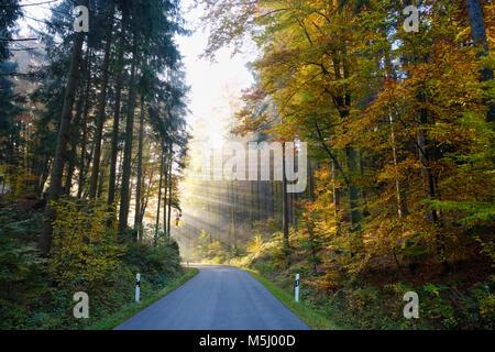 Morgennebel im Wald, Landstraße nahe Gundlfing bei Riedenburg, Naturpark Altmühltal, Niederbayern, Bayern, Deutschland - Stock Photo