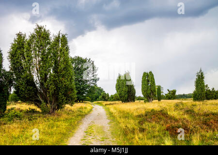 Germany, Lower Saxony, Lueneburg Heath - Stock Photo