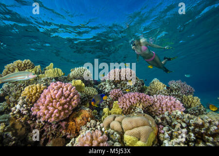 Egypt, Red Sea, Hurghada, young woman snorkeling at coral reef - Stock Photo