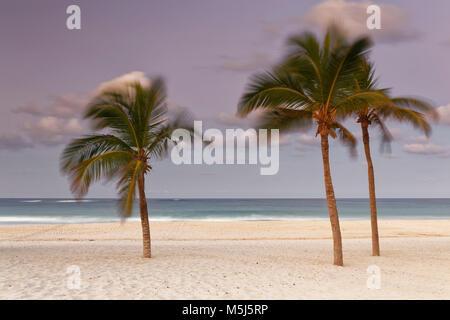 Carribean, Dominican Republic, Punta Cana, Playa Bavaro, moving palms on the beach at sunset - Stock Photo