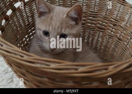 Portrait of Male Ginger Kitten in Basket - Stock Photo