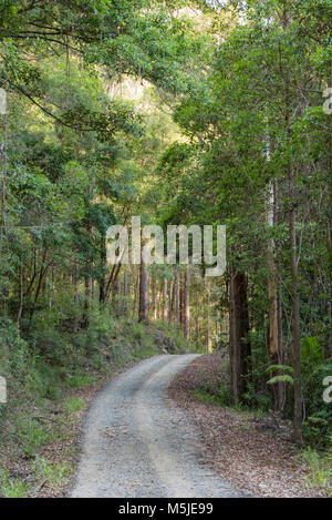 A winding dirt road bordered by Eucalyptus Trees on both sides, near The Pines Picnic Area in the Yarriabini National - Stock Photo