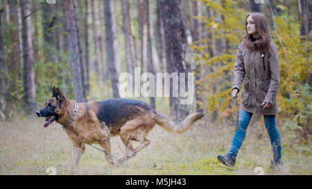 Young pretty attractive woman playing with her pet - german shepherd - walking on a autumn forest - girl throws - Stock Photo
